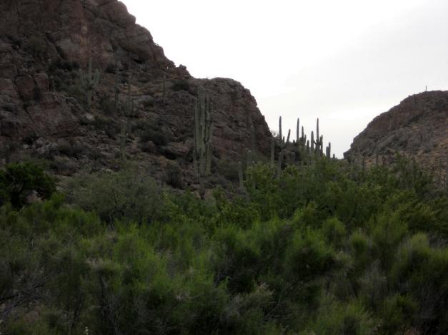 arnett canyon1